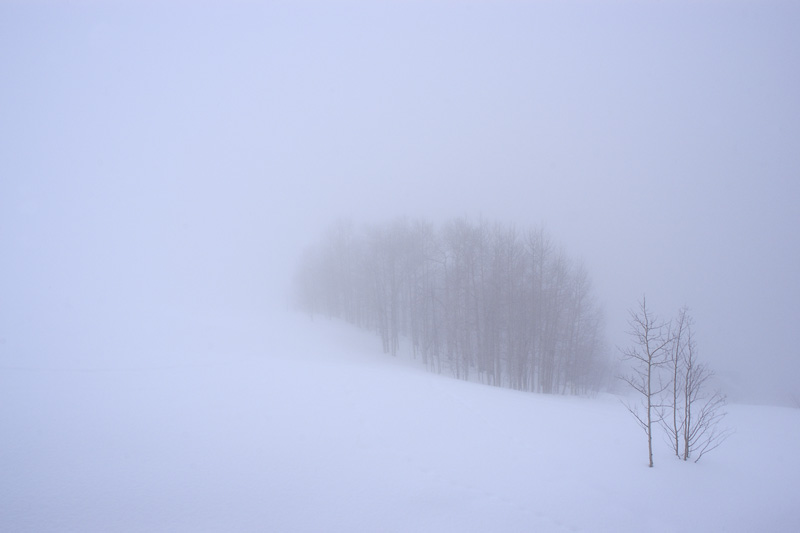 Aspen Stand in the Fog