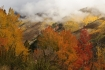 Snowmass Fall/ Snowmass Village, CO